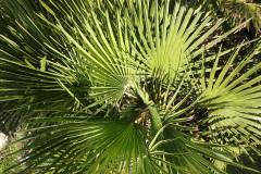 El Chorro - plante